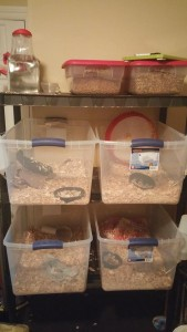 Installation des cages et accessoires