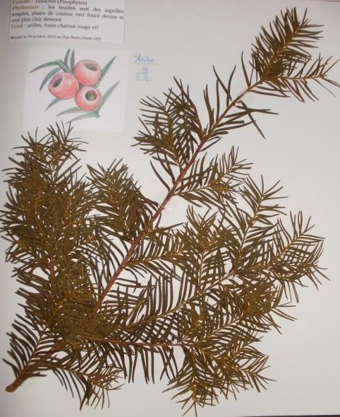 Page d'un herbier de feuilles