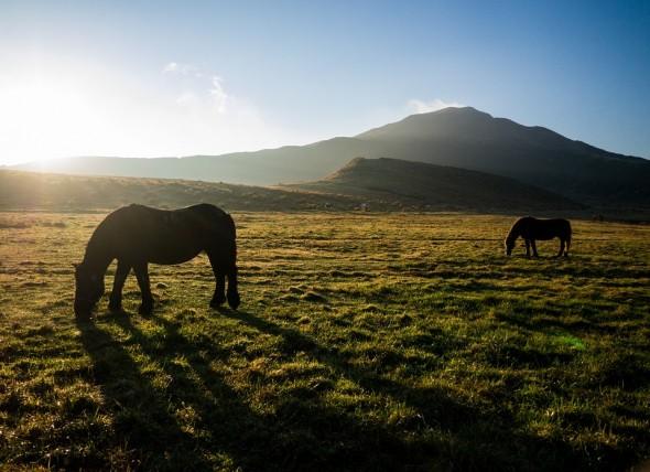 Les races de chevaux japonaises