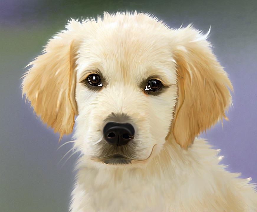 Bien choisir la race de son chien