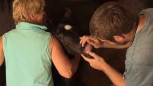 vétérinaire équin métiers du cheval