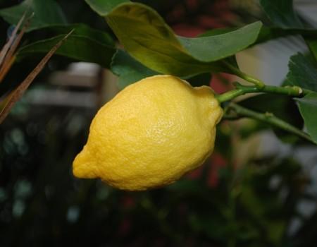 Ne sois pas si pressé d'avoir des citrons