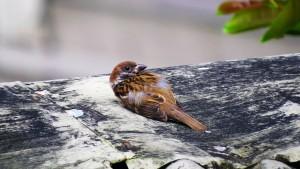 Petit oiseau en détresse