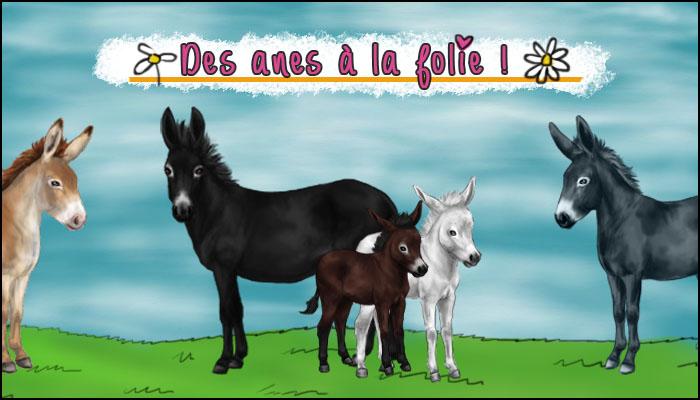 6 bonnes raisons d'élever des ânes sur Monchval.com