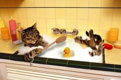 laver son chat huile essentielles