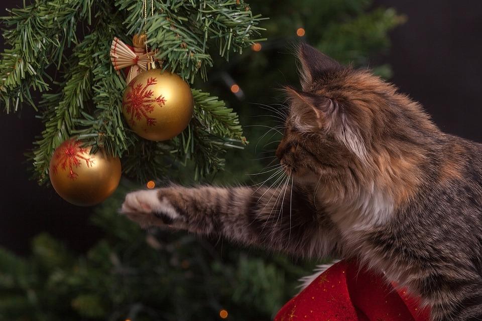 Pour Noël, choisissez-vous un sapin naturel ou un sapin artificiel ?