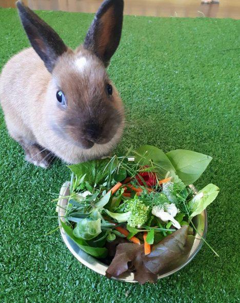 Les légumes et verdures pour le lapin