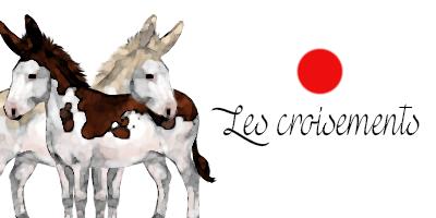 Croisement d'ânes pies