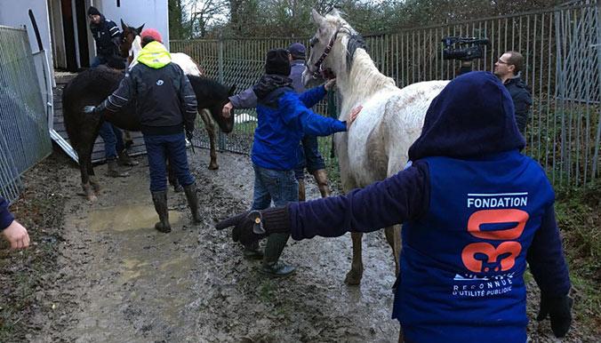 Sauvetage de 106 chevaux abandonnés en Vendée