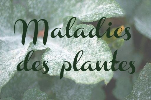 Les maladies fongiques communes des plantes du jardin