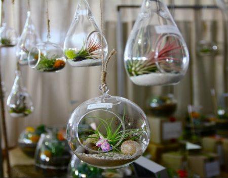 Terrariums : un monde sous verre