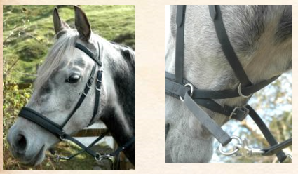 Parmi les harnachements sans mors, on retrouve le bitless bridle