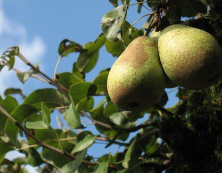 Le Légendaire de l'automne, des histoires dans nos jardins – Partie I