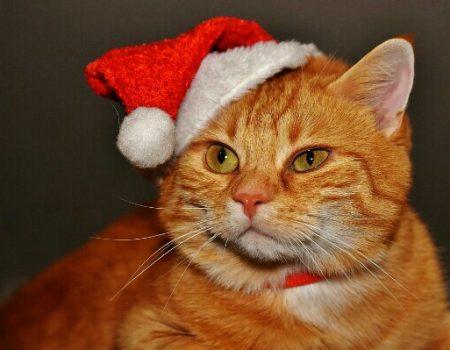 Quelques idées de cadeaux de Noël pour vos compagnons à poils !