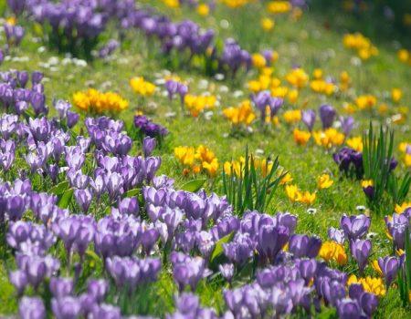 10 raisons d'aimer le printemps