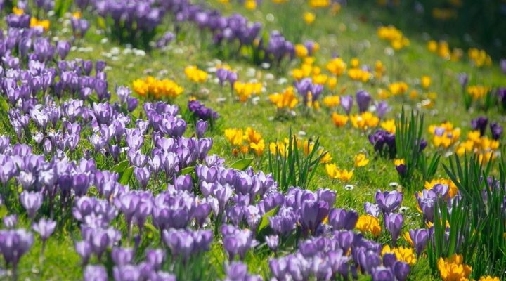 10 raisons d'aimer le printemps