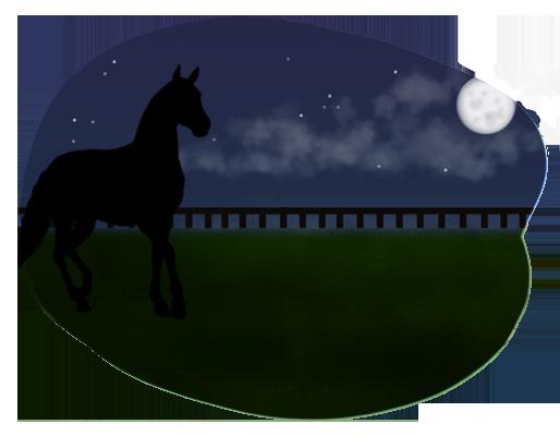 Cheval au pré la nuit