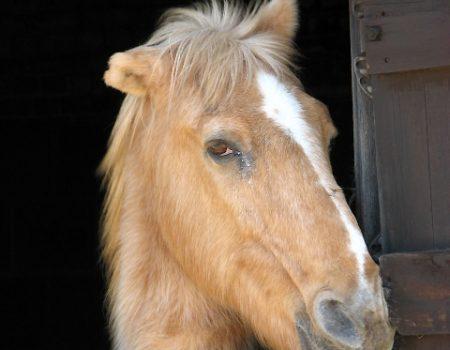 Des chevaux mutilés dans toute la France