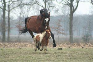 mystère chevaux mutilés