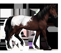 Cheval capé baie brun