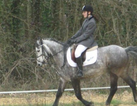 Les races de poneys français
