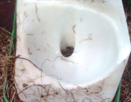 Recette de pierre à sel maison pour les chevaux