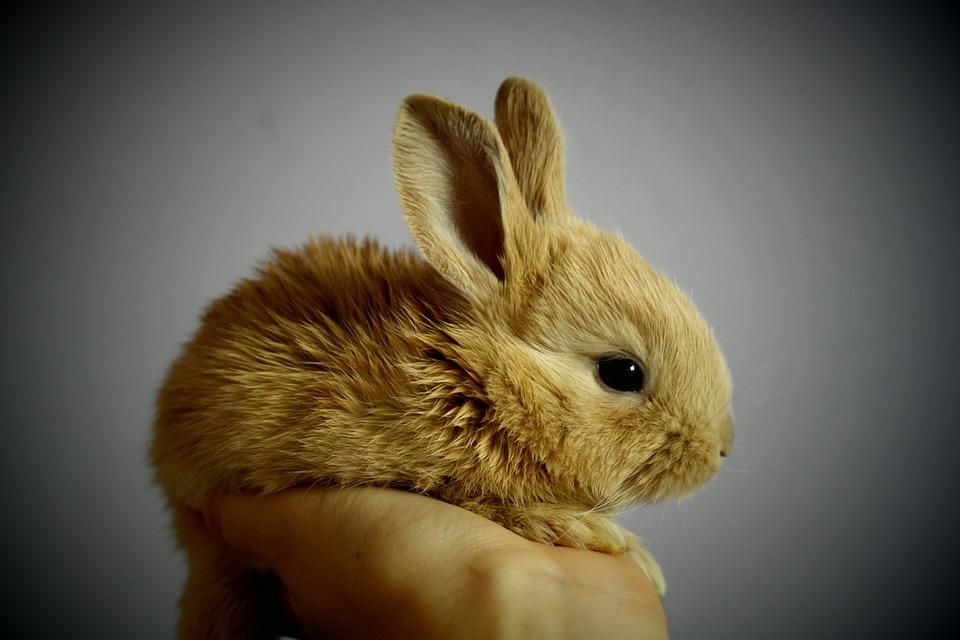 Les règlements en matière de tests sur les animaux
