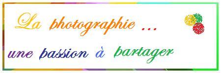 La photographie : une passion à partager