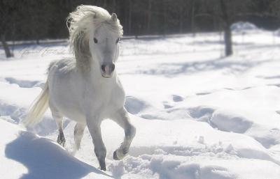 L'entretien du cheval en hiver