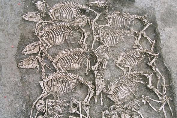 L'archéozoologie : étude d'une science pluridisciplinaire