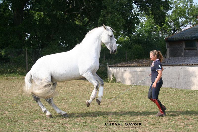 Comment acquérir le respect de son cheval ?