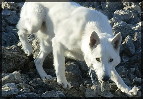 Le blanc chez les animaux