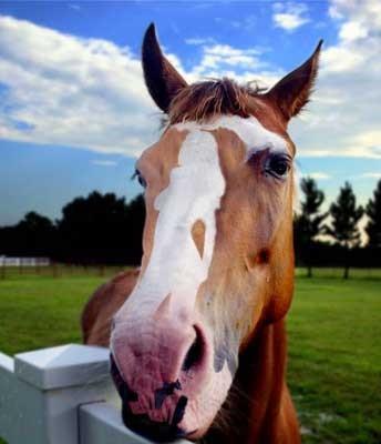 Illusion d'optique : un cheval qui a des formes