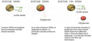 Certains OGM résistent aux herbicides