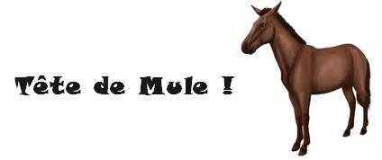 « Tête de mule » mais pas « bonnet d'âne » !