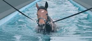 Le nouveau phénomène la piscine