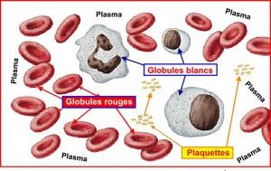 Constituants du sang : cellules et plasma
