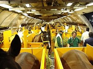 horses_on_plane