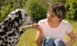 Les relations maître-animal de compagnie