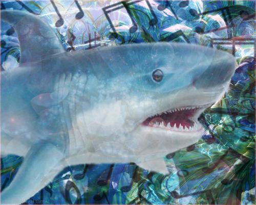 Les dents de la mer montage
