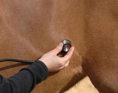 Vétérinaire lors d'une colique