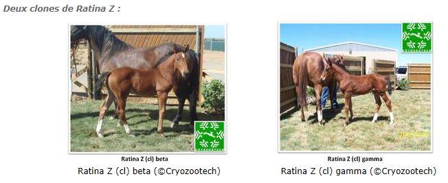 Deux clones de Ratina Z
