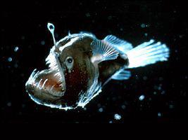 La bioluminescence comme technique d'attaque des animaux