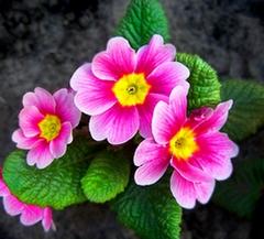 Les fleurs et arbustes qui poussent en hiver