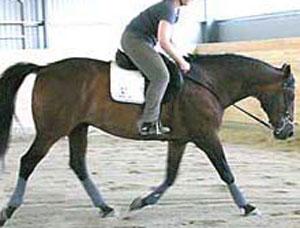 Le cheval sur les épaules