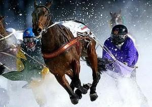 ski joëring cheval