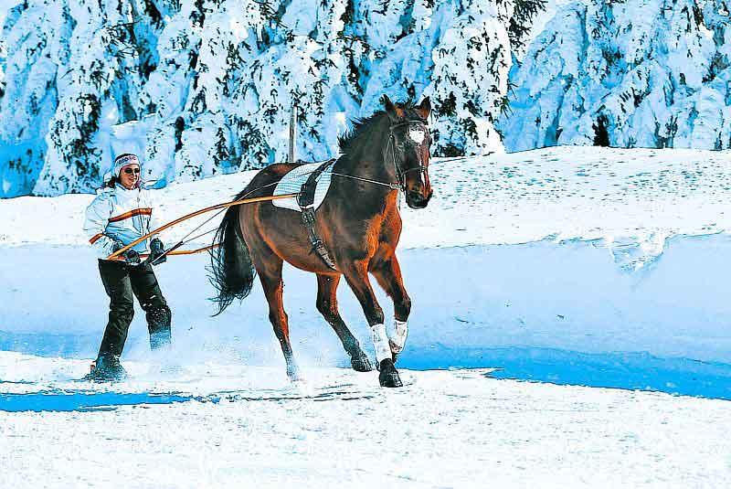 Ski joëring : mêlez ski et cheval !
