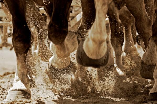 Gale de boue du cheval et sable