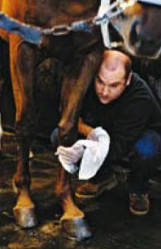 laver les membres du cheval traiter gale de boue