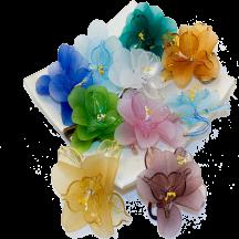 Il s'agit de fleurs de différentes couleurs